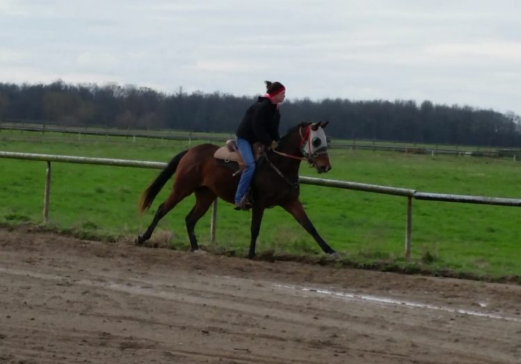 2 yr old in training (Hope)