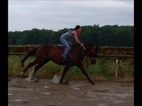 2yr old in training (Rudy)